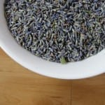Guest Post: Lavender, a Soothing and Medicinal Herb