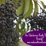 Monday Health & Wellness: Is Elderberry Really The Best Flu Remedy?